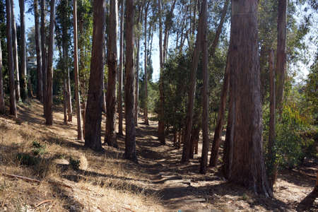dirt path: Dirt Path going down in dry Forest in Berkeley, California.