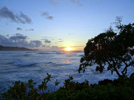 north shore: Sunset through the trees over the ocean with waves rolling on the North Shore of Oahu. Stock Photo