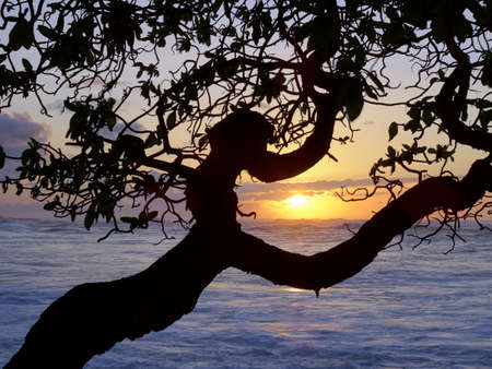 north shore: Sunset through the trees over the ocean on the North Shore of Oahu. Stock Photo