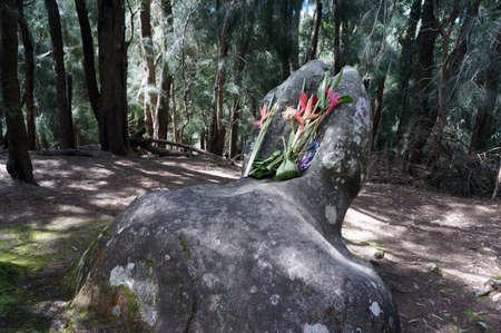 phallic: Phallic Rock with flower offerings in Palaau State Park on Molokai, Hawaii.