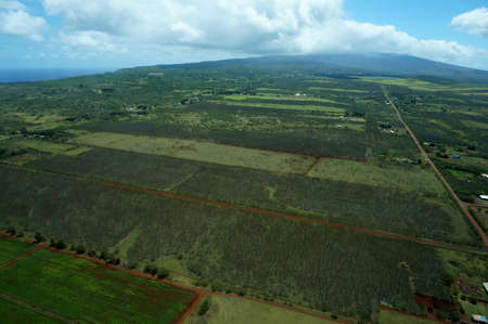 cropland: Aerial of Farm fields of different stages of age running to the Mountains on Molokai, Hawaii. April 2016.