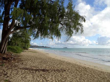 Ironwood Trees hang over Waimanalo Beach looking towards mokulua islands on Oahu, Hawaii.