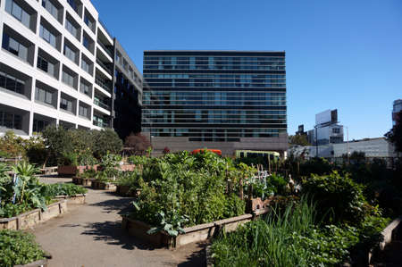 Vegetables grow in Community Garden in San Francisco, California with surrounded by tall buildings.