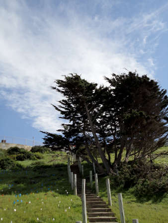 Hillside Stairs leading upwards with tree along path at China Beach in San Francisco.