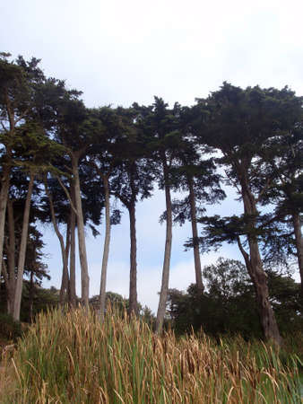 Trees and tall grass in Golden Gate Park in San Francisco.