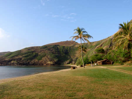 Grass field with coconut trees on Hanauma Bay Beach In The Early Morning on the southeast shore of Honolulu Hawaii. Taken from the beach.