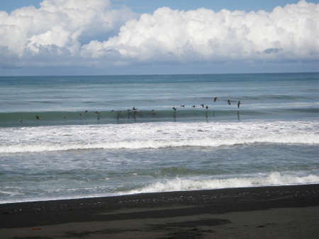 Seagulls Flying in line Formation over waves in off of beach in Punta Banco, Costa Rica