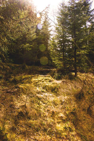 swiss alps: Forest in Swiss Alps Stock Photo
