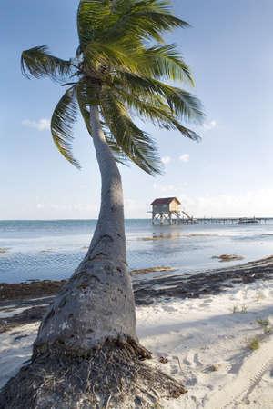 Palm tree and Hut at Sunset Stock Photo