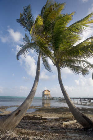 tourism in belize: Palms, Pier and Hut late in the Day
