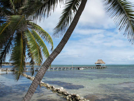 Palms along a Calm Waterfront in Belize