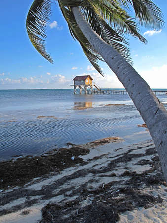 Late afternoon light along the beach on Ambergris Caye in Belize.