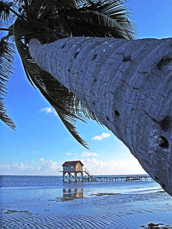 tourism in belize: Palm tree and hut along the beach on Ambergris Caye in Belize.