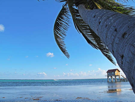 Palm tree and hut along the beach on Ambergris Caye in Belize.