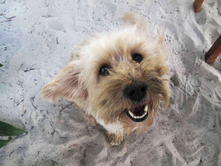 Happy beach dog on Ambergris Caye in Belize.