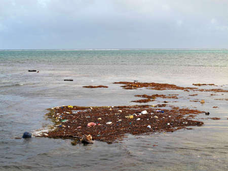 Raft of debris floating in the Gulf of Mexico.