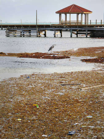 Pollution and debris on the shore with native birds.