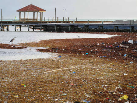 Pollution and debris on the shore with native birds.                              Stock Photo