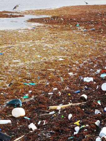 汚染とネイティブの鳥と海岸上の破片。