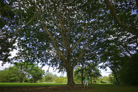 Hawaiian Tree Garden Stock Photo - 6853221