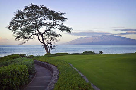 Maui Sunrise, Walkway and Tree photo