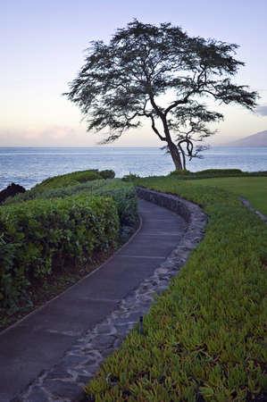 Maui Sunrise, Walkway and Tree Stock Photo
