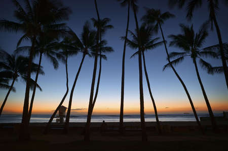 Palm Trees at Honolulu Sunset Stock Photo - 6952220