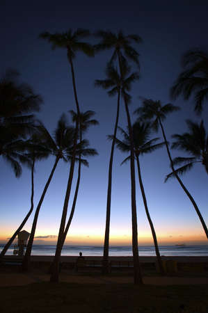Palm Trees at Honolulu Sunset Stock Photo