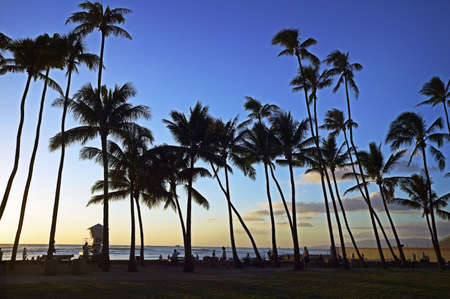 Palm Trees at Waikiki Sunset photo