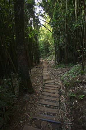 Bamboo Forest Trail, Oahu photo