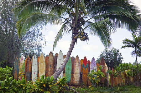 aloha: Surfboard Fence Row