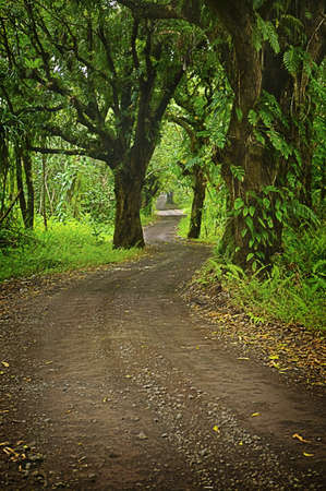 Lush, Tropical Road leads to Beaches on Big Island of Hawaii photo