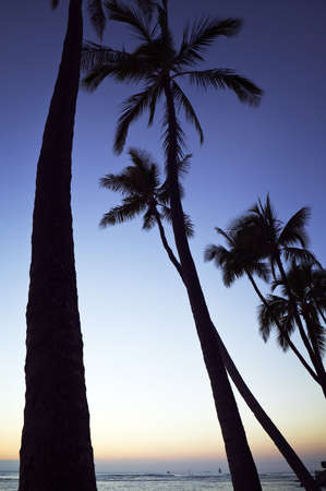 Palm Trees at Sunset on Waikiki Beach, Oahu photo