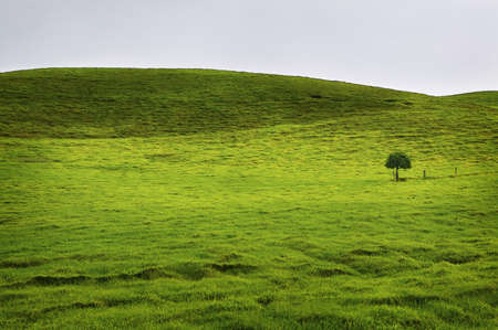 Rolling Green Fields, Big Island of Hawaii photo