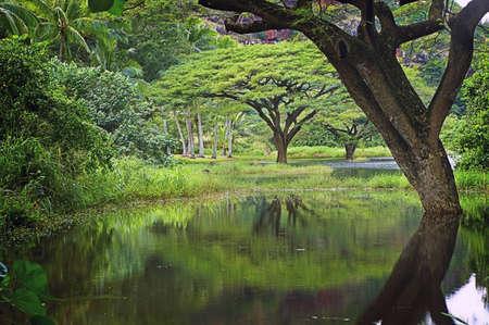 Garden Pond & Trees, North Shore, Oahu, Hawaiian Islands