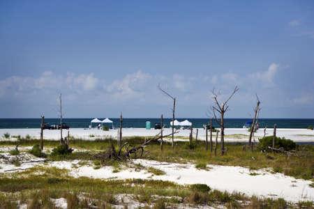 cleanup: Oil Clean-Up Crews at Work, Florida
