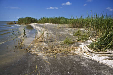 beached: Beached Oil Boom, Gulf Coast