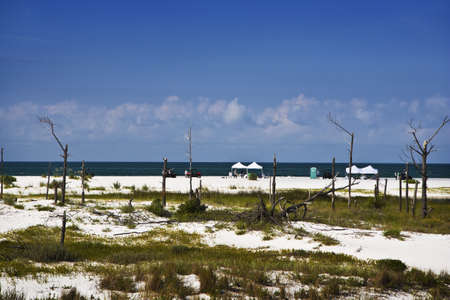 cleanup: Clean-Up Crews on the Beach, Gulf Coast