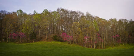 Spring Bloom in the Smoky Mountains