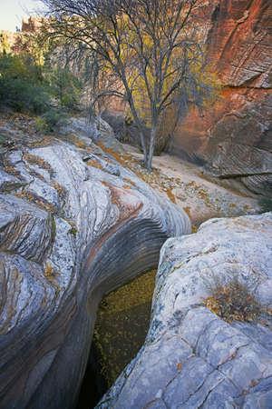 slot canyon: Slot Canyon Mouth and Trees