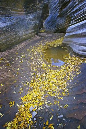 slot canyon: Slot Canyon & Yellow Leaves