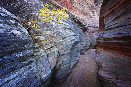 slot canyon: Yellow Bush & Colorful Slot Canyon Stock Photo