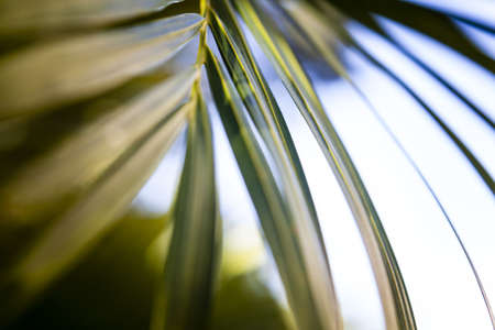 Tropical Palm Frond