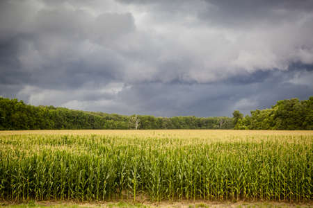 Coming Storm over Corn Fields Stock Photo