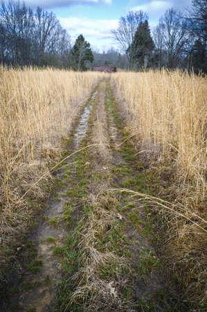 Overgrown Fields   Path