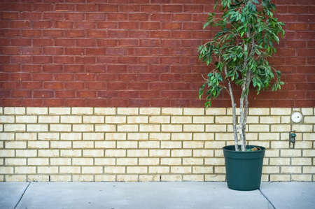 Potted Plant   Brick Wall