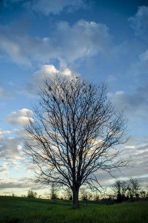 Fall Season Sunset   Tree