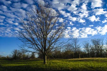 Tree   Field in Fall Season