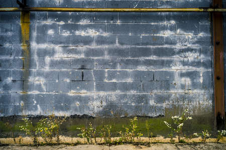 Blue Concrete Wall and Weeds