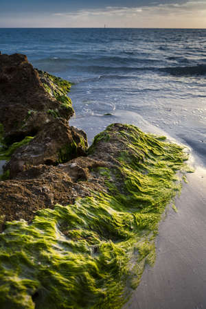 Mossy Rocks   Beach Scene Stock Photo